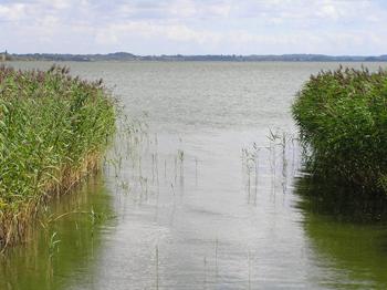 Billed fra området