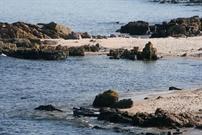 Feriehus til 4 personer ved Sandkås